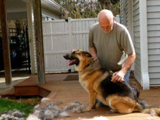 Мужчина вычесывает немецкую овчарку