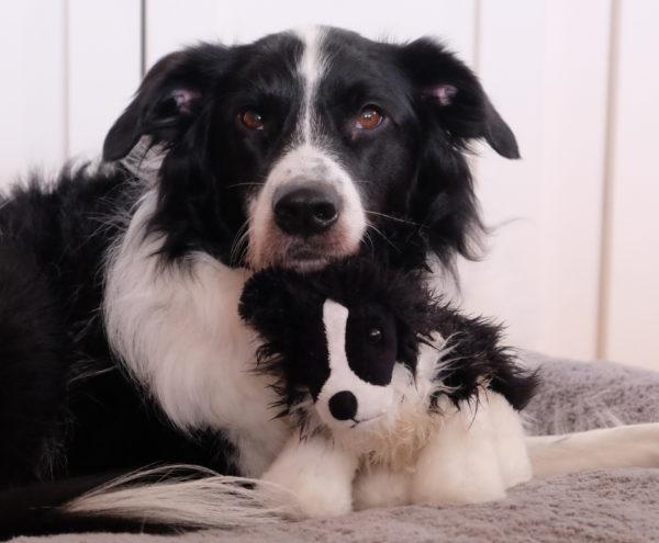 Английская овчарка с мягкой игрушкой