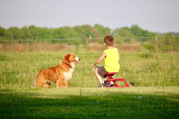 Английская овчарка и ребенок на велосипеде