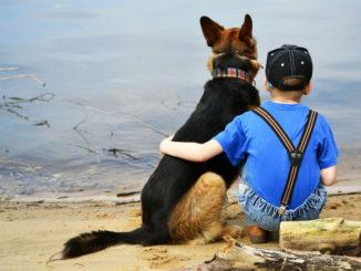Немецкая овчарка и мальчик на берегу реки