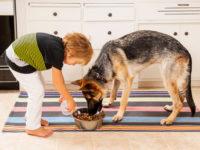 Мальчик кормит овчарку
