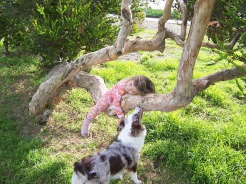 Австралийская овчарка и девочка