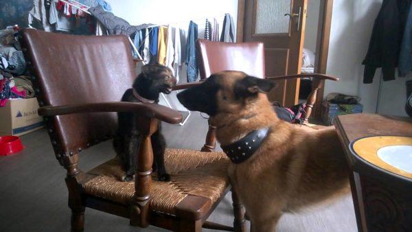 Малинуа и кошка