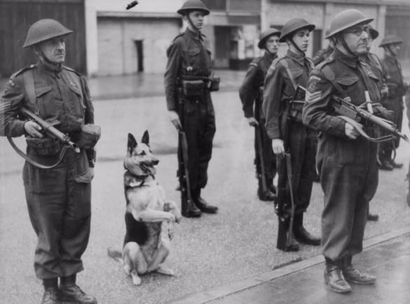 Немецкая овчарка несет службу в немецкой армии