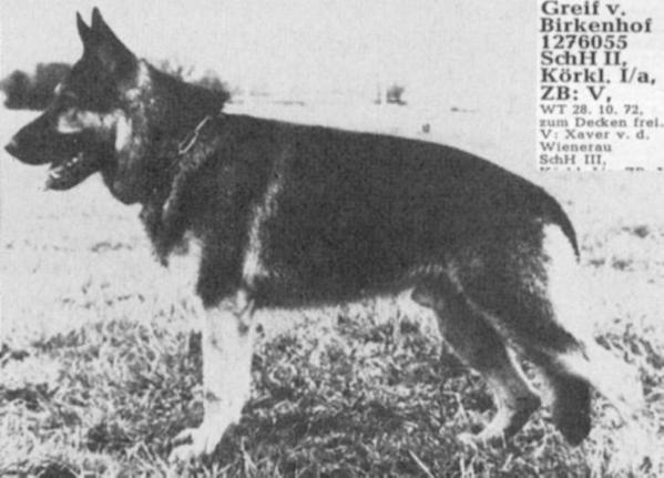 Первый представитель немецкой овчарки Грайф